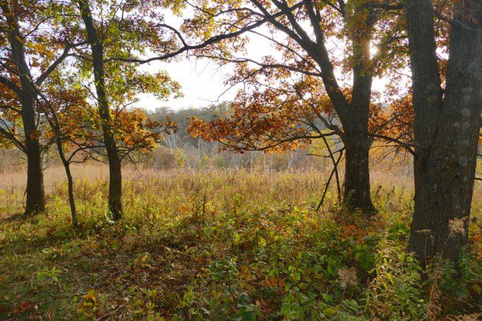 hidden-oaks-savanna