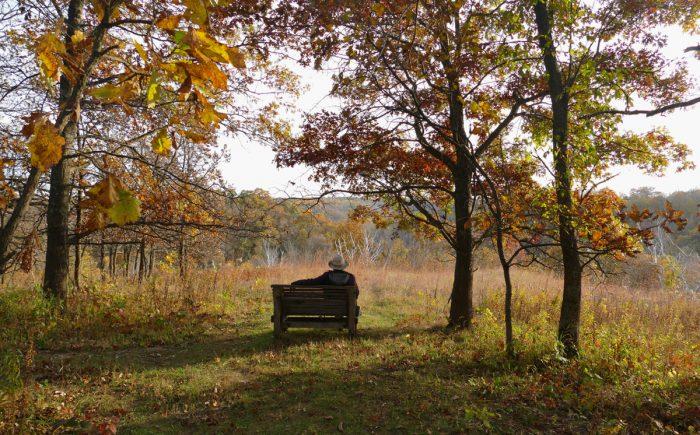 hidden-oaks-bench