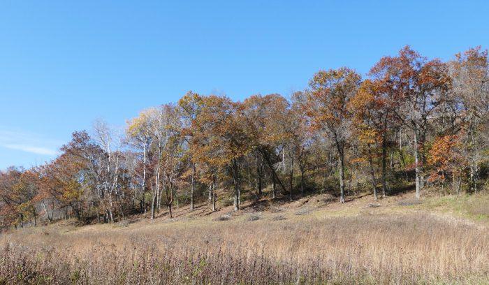 indian-grass-hill-10-21-16-1