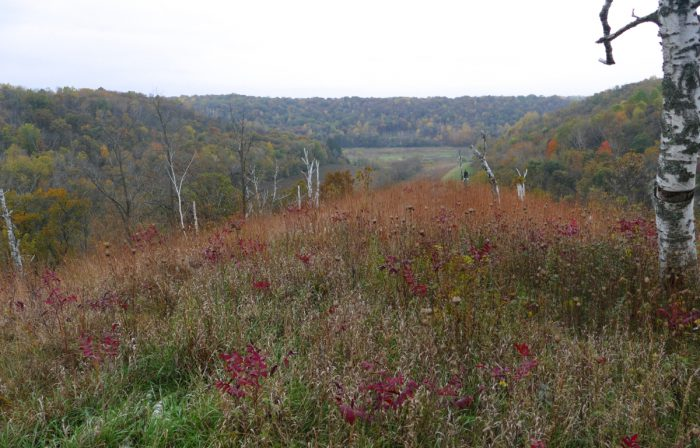 indian-grass-point-view