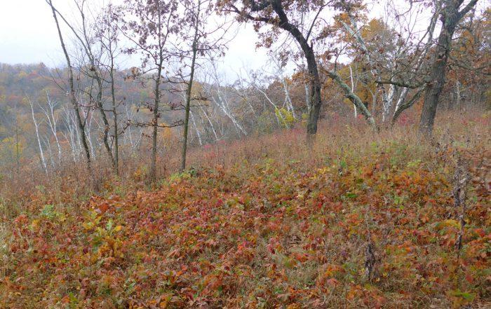 indian-grass-savanna-10-17-16