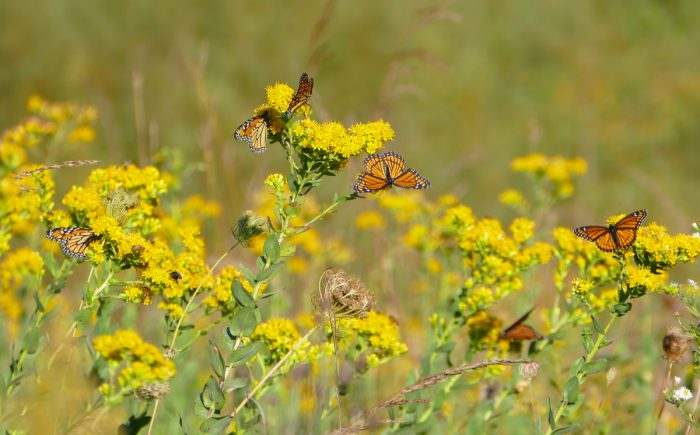 monarchs-and-viceroys-9-14-16-1