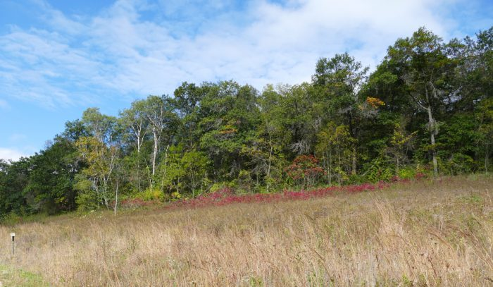 indian-grass-hill-10-1-16-2