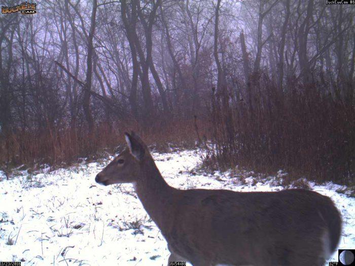11-23-16-deer